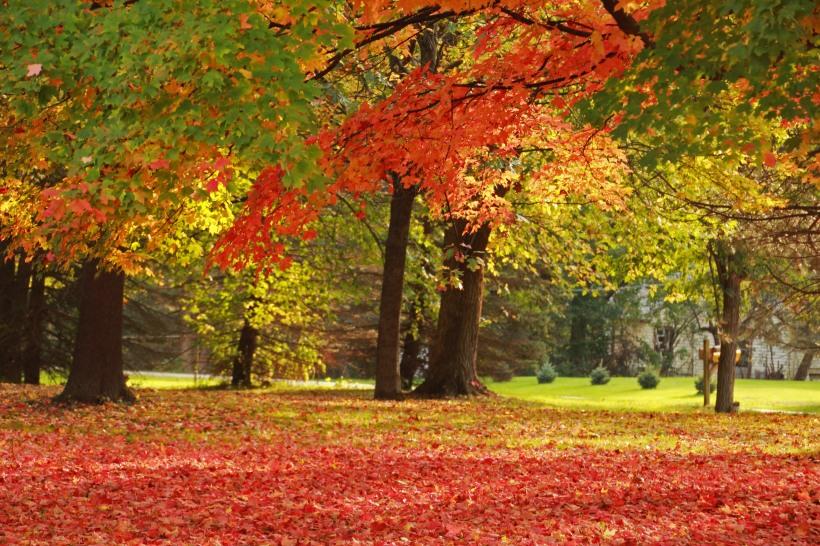 Autumn light catches color.