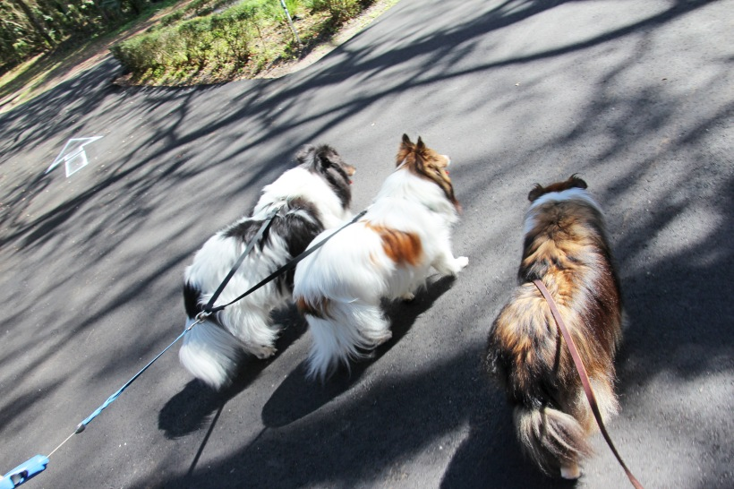 Going for a walk with my guys.