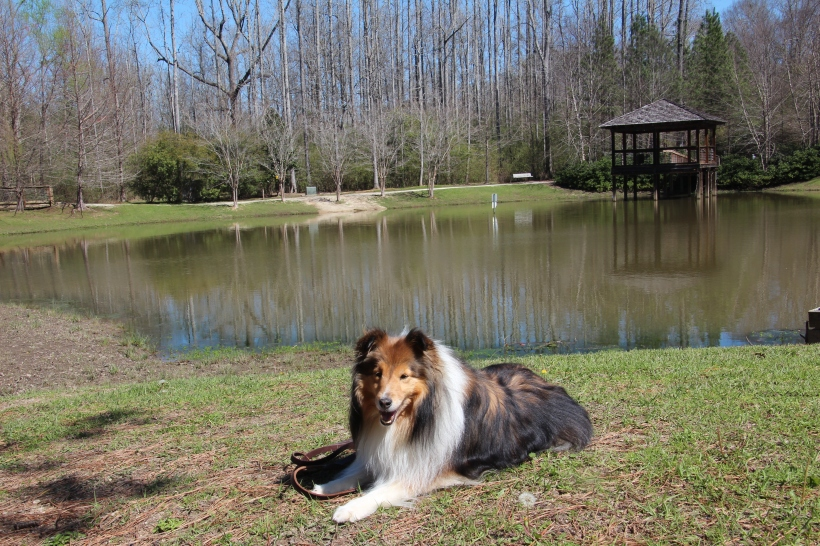 Isn't this a pretty lake mama?