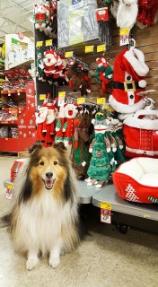 Katie Christmas shopping