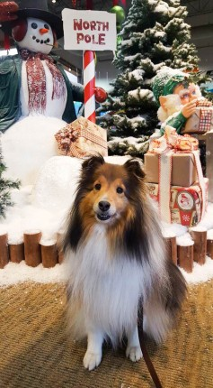 Katie Christmas