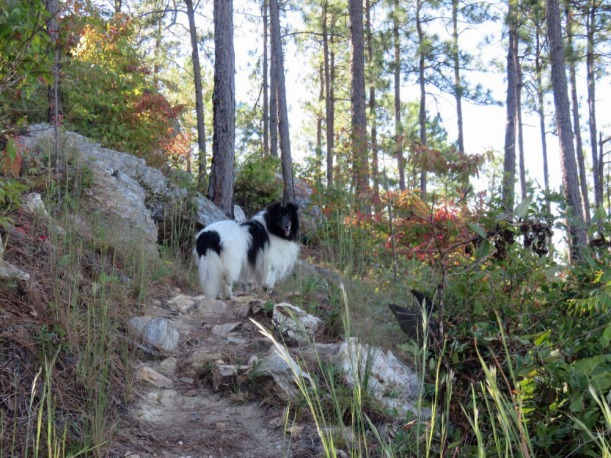 Reilly on my mountain.  (picture by his mom)